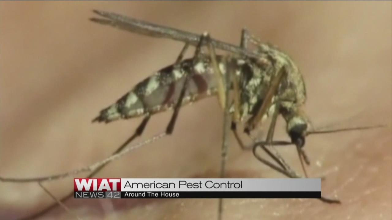 Around the House Mosquito control_104390