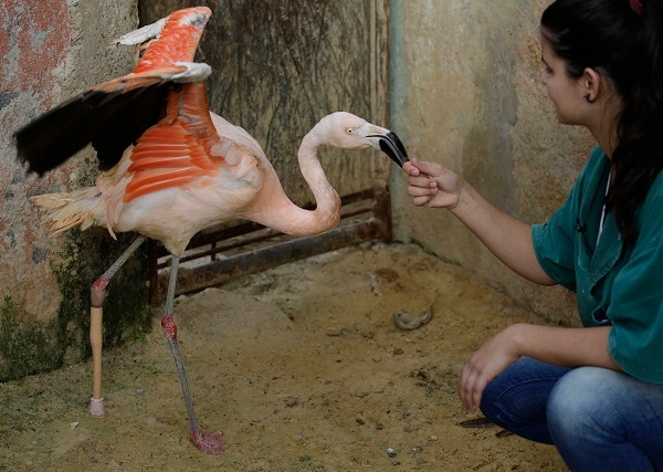 Brazil Artificial Leg Flamingo_103928