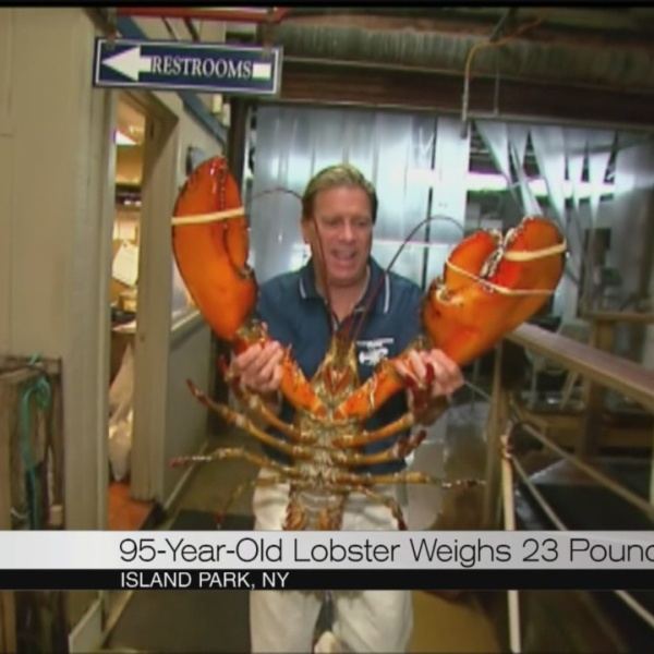 giant lobster_107495