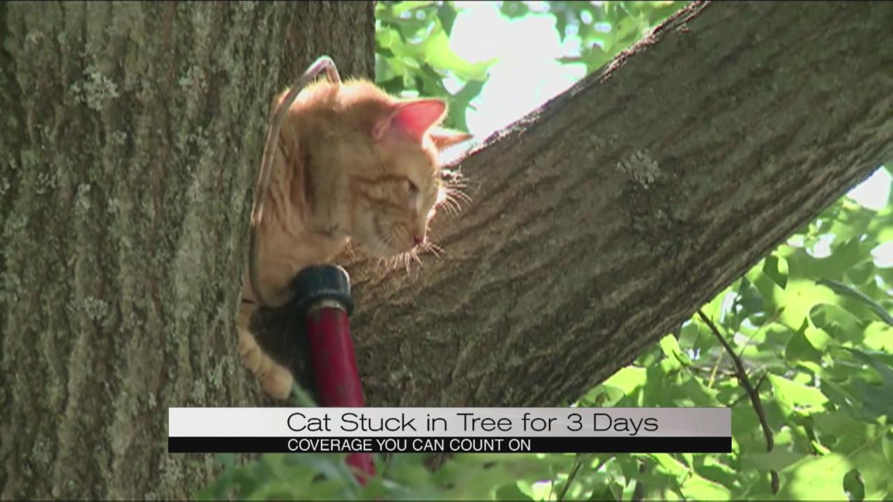 cat in tree_111028