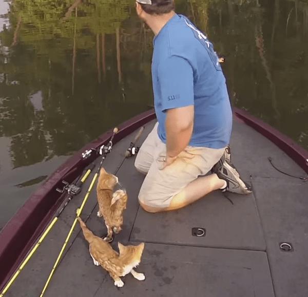 Kittens on Warrior River_116496