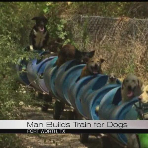 Dog train_121892