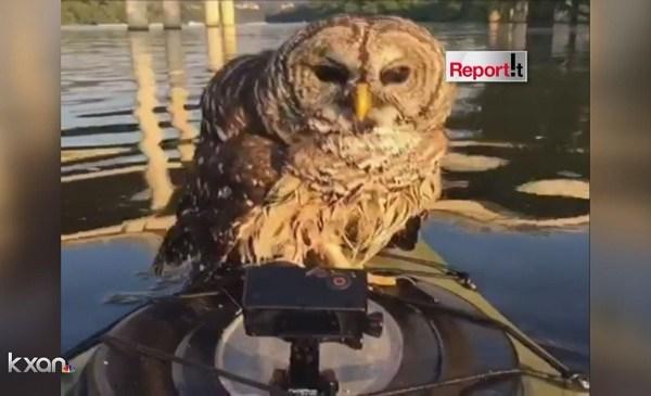 Owl_122315