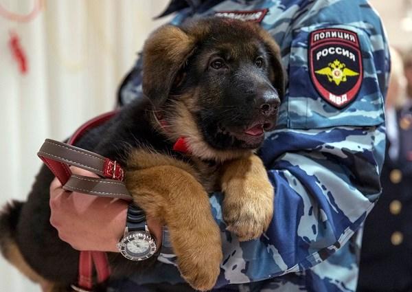 APTOPIX Russia Paris Attacks Puppy_138537