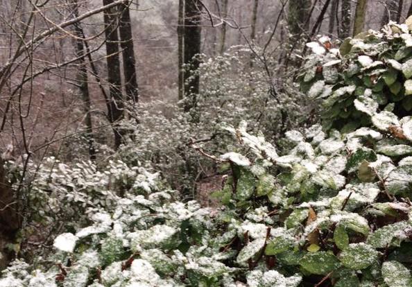 snow_146884