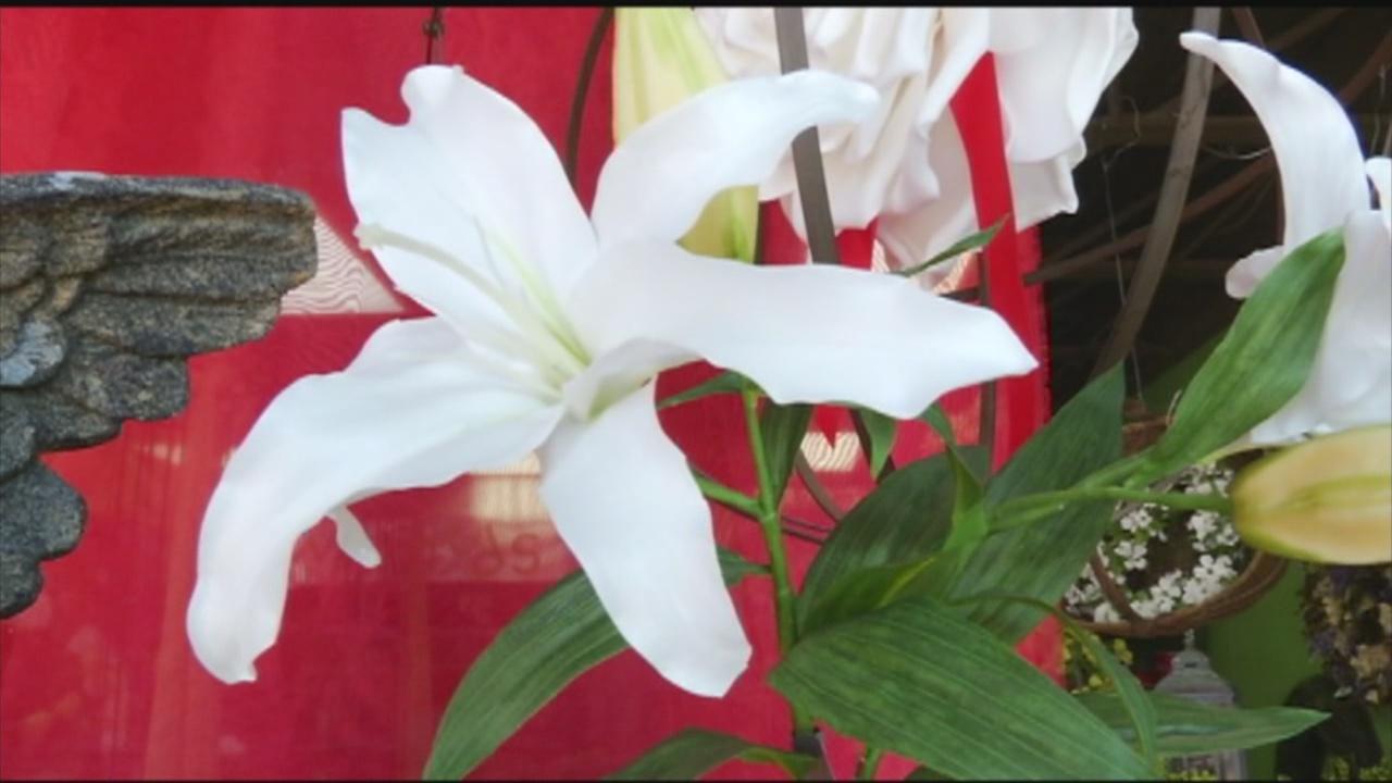 Flowers_151990