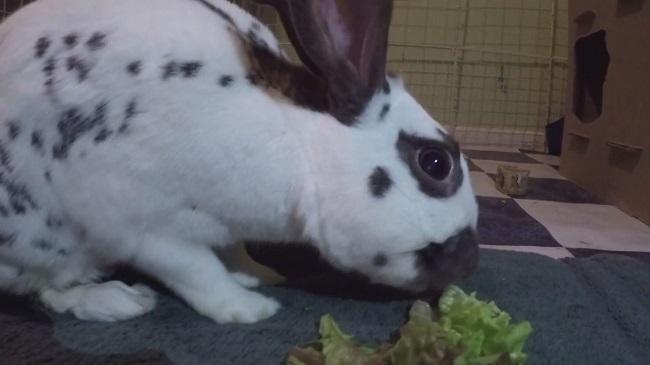 Bunny_162439
