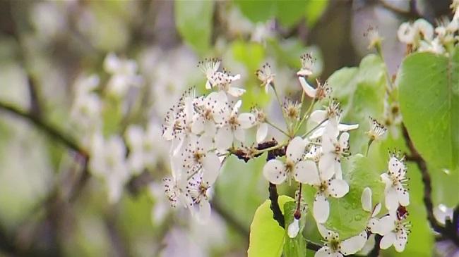 pollen_158632