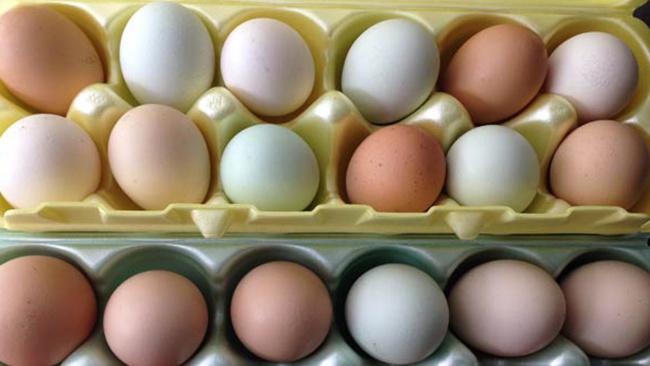 eggs_164349