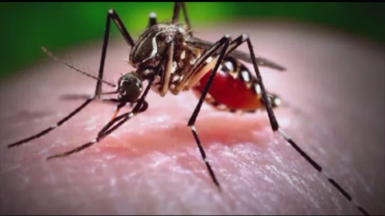 mosquito zika virus_158295