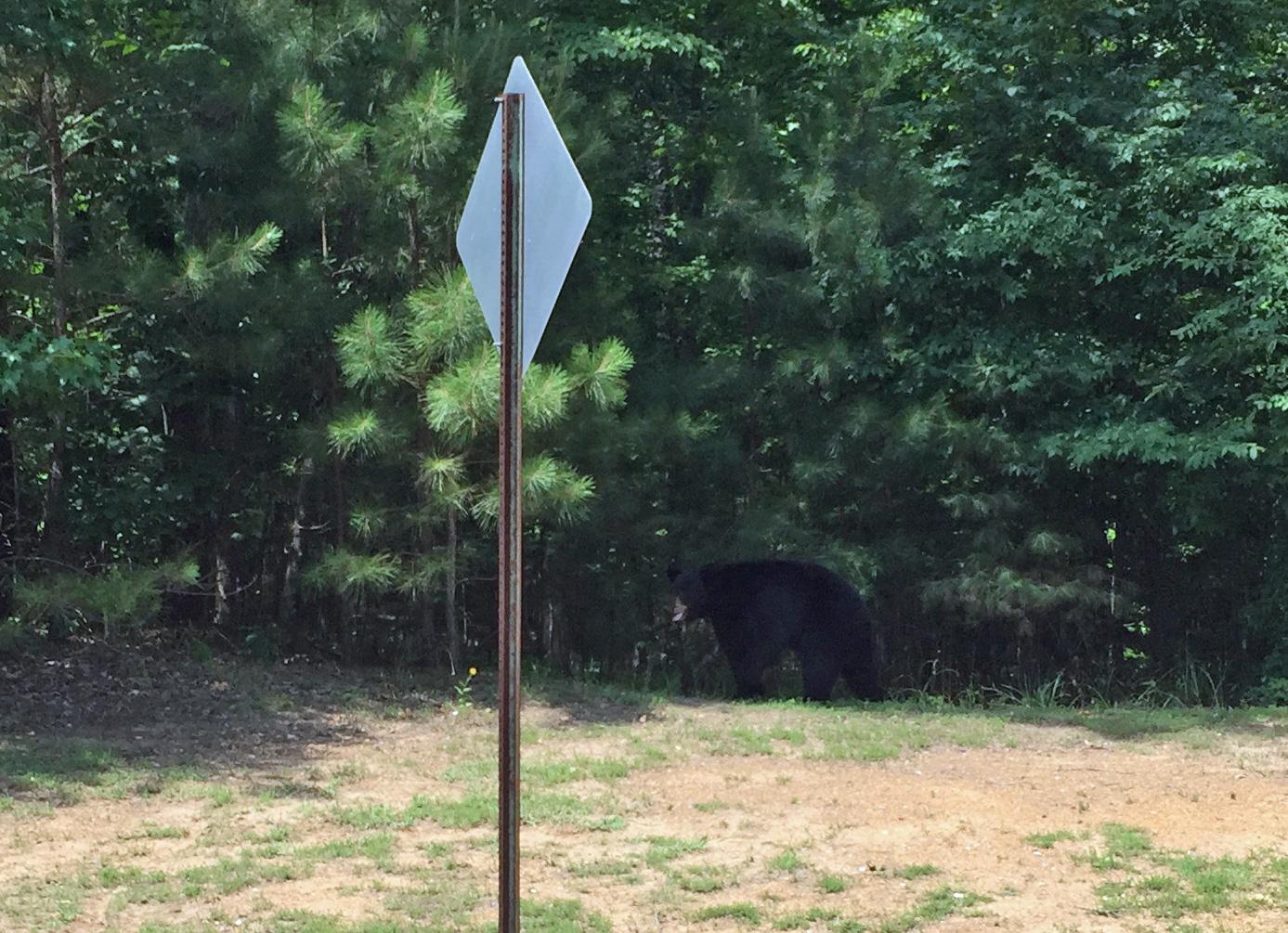 bear-in-ballantrae-pelham-neighborhood-alabama_177328