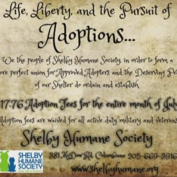 $17.76 adoptions_180476