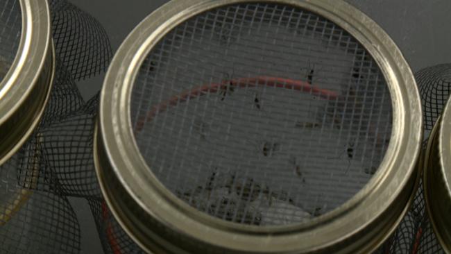 zika-testing_kxan-richie-bowes_207729