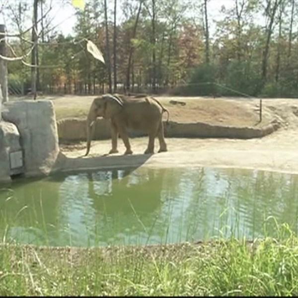 zoo-drought_204987