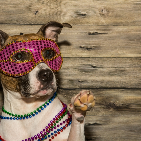A cute dog dressed up for Mardi Gras._220506