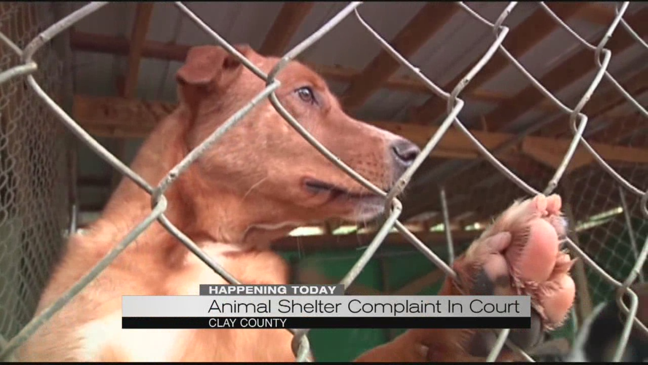 animal-shelter-complaint-in-court_231283
