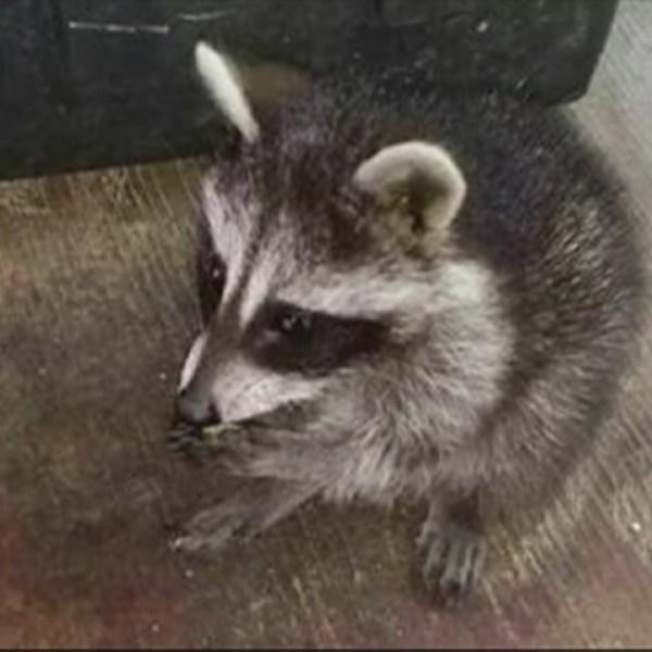 raccoon-city_194741