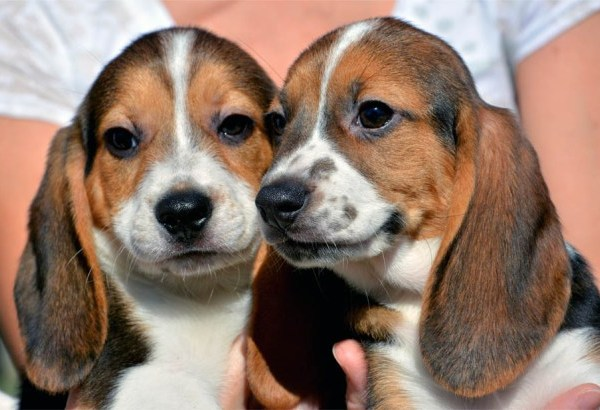 Pets Test Tube Puppies_138819