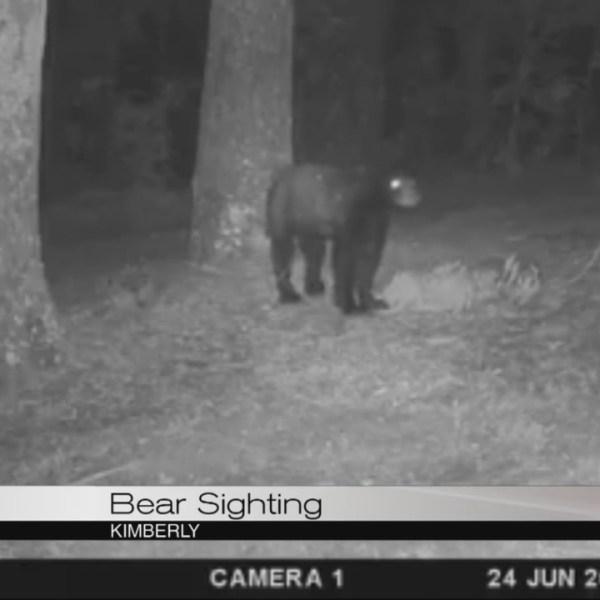 bear_283344