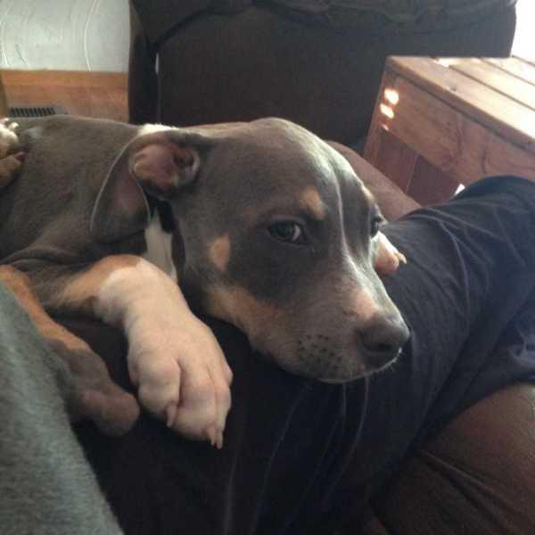 dogkilled_286499