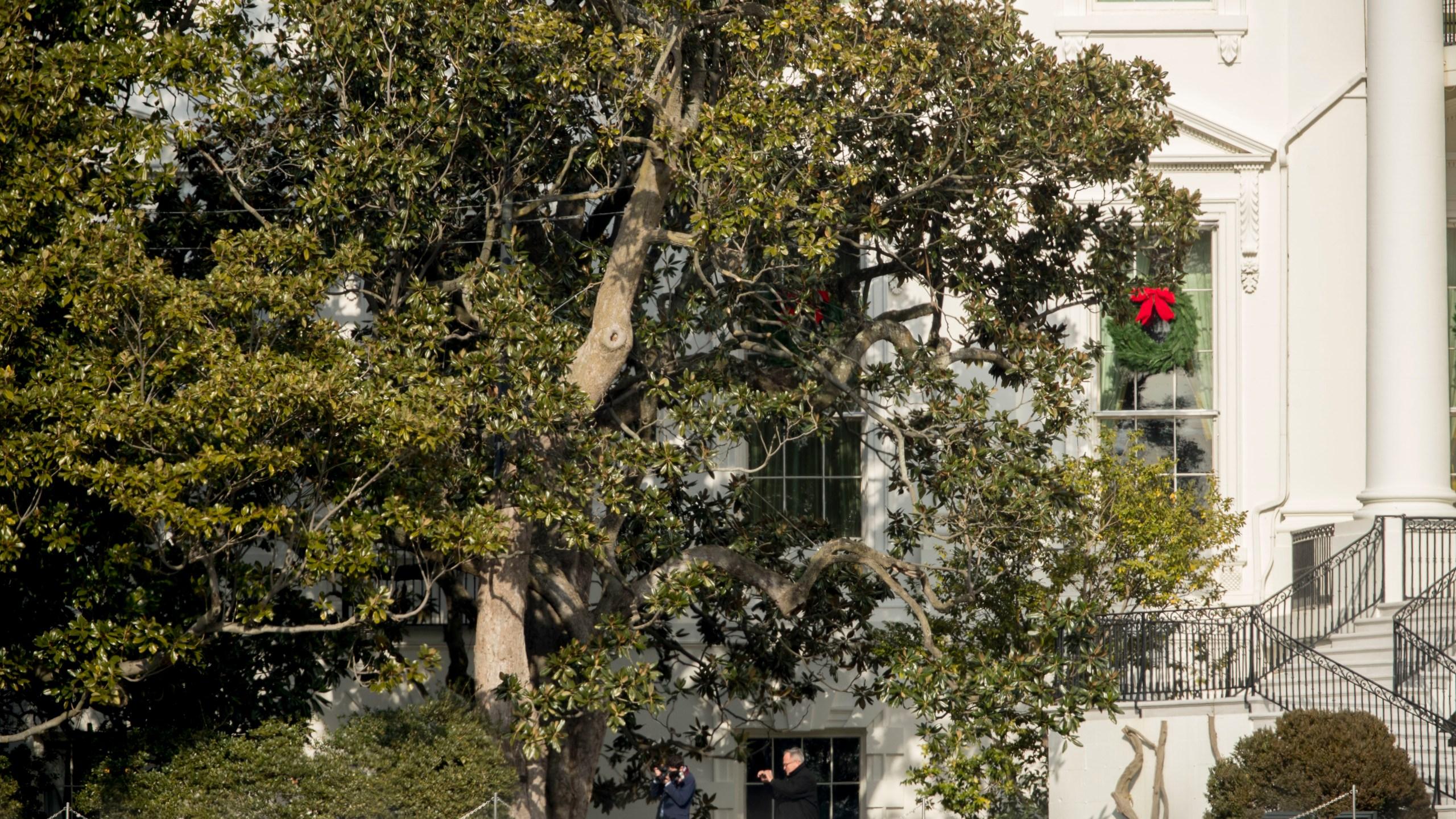White House Magnolia Tree_353851