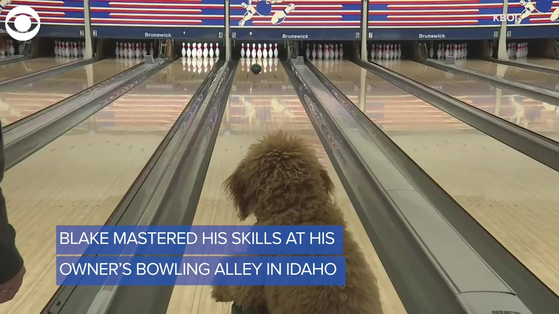 Blake the bowling dog digital extra