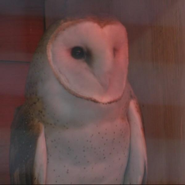 owl Birmingham zoo
