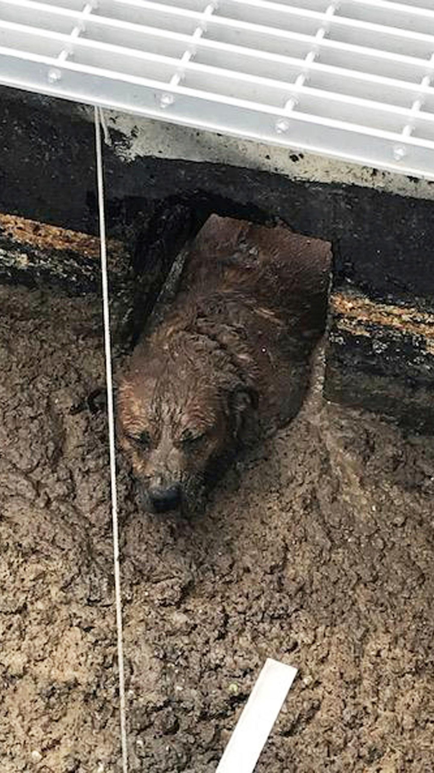 Dog_Rescue_Colorado_88564-159532.jpg51300623