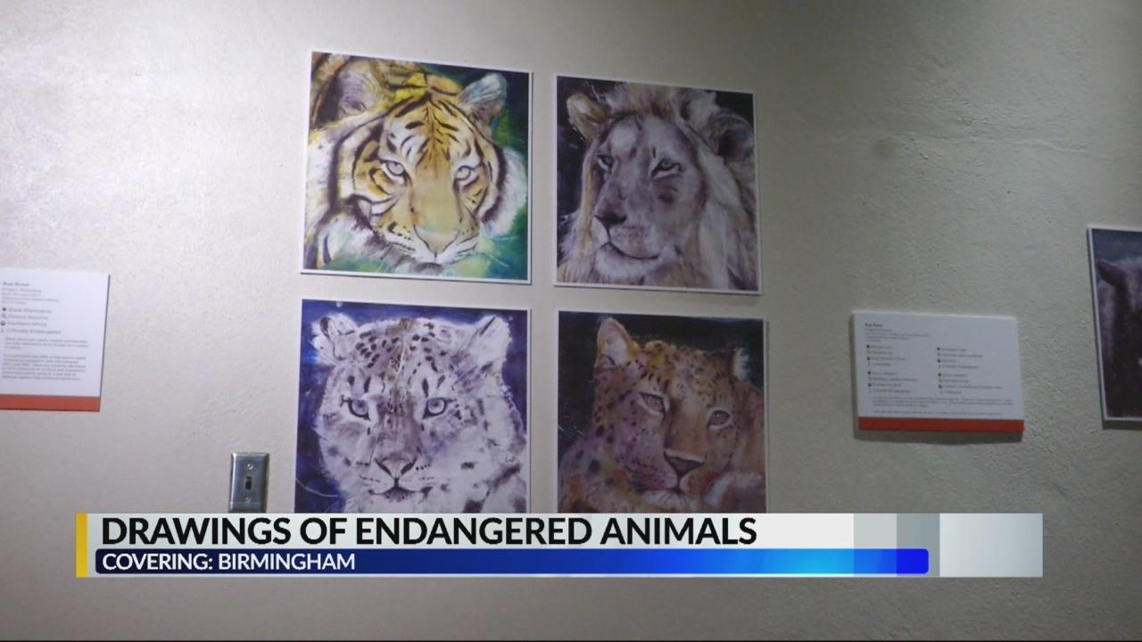 bham zoo animal drawings