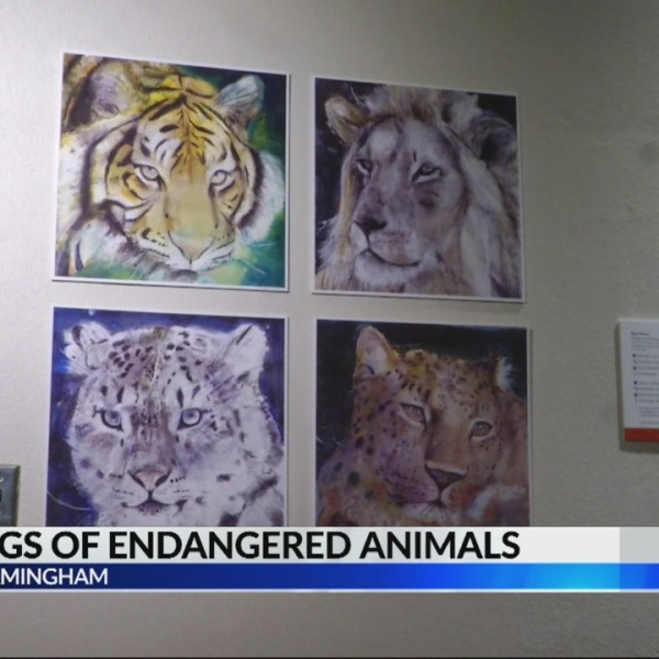 bham zoo animal drawings