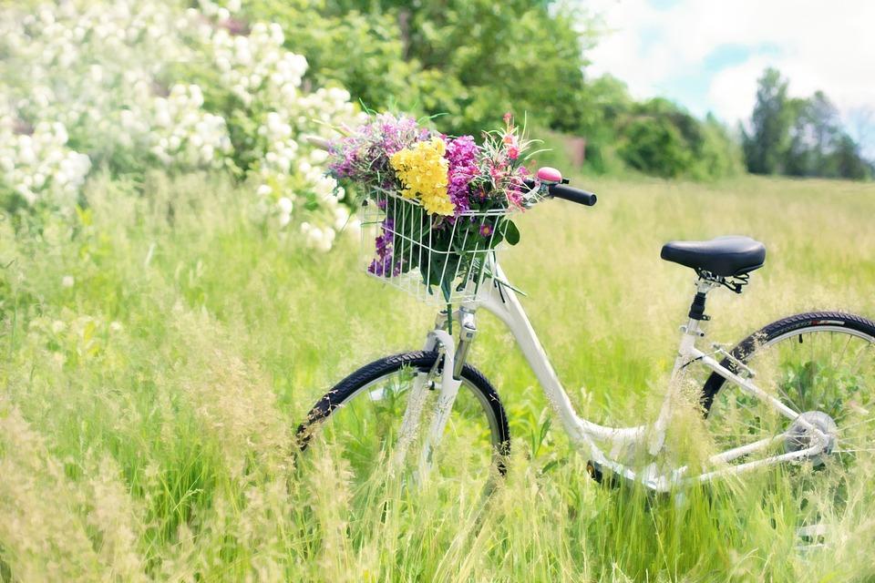 bicycle bike field spring pixabay_251252