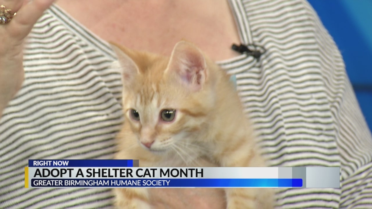 shelter cat month noon