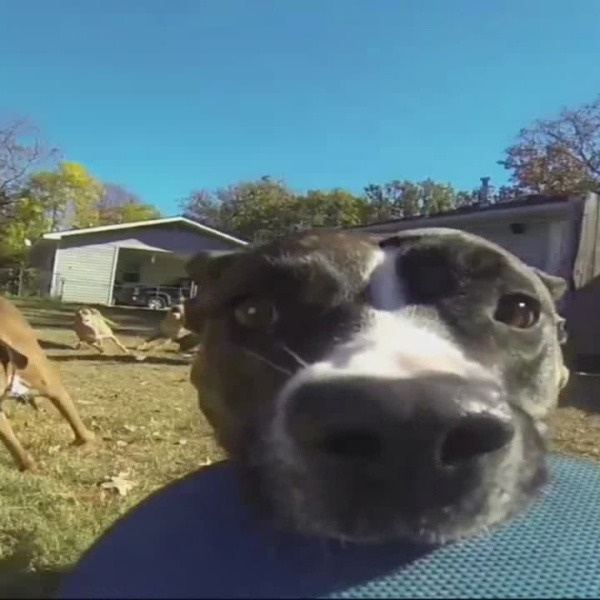 Dog_steals_gopro_0_20180801113343