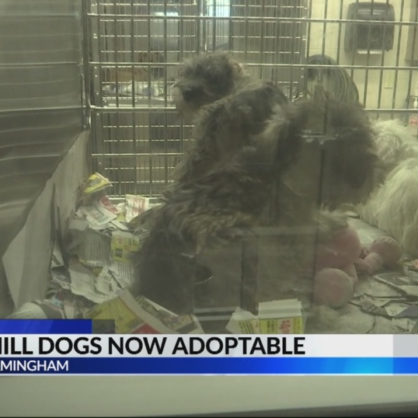 Puppy mill dogs now adoptable