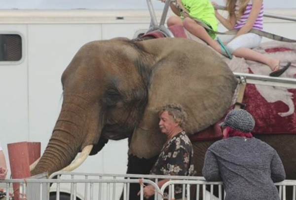 nosey_the_elephant_1533162656509-159665.jpg