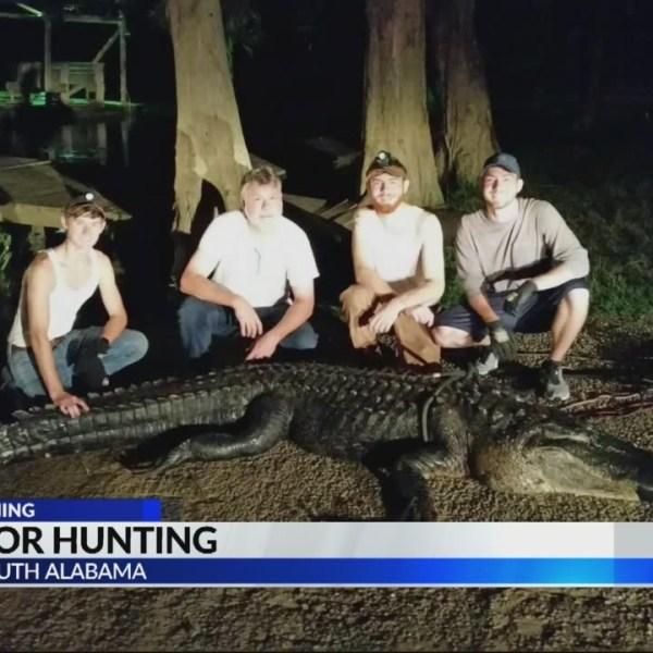Alligator Hunting 2