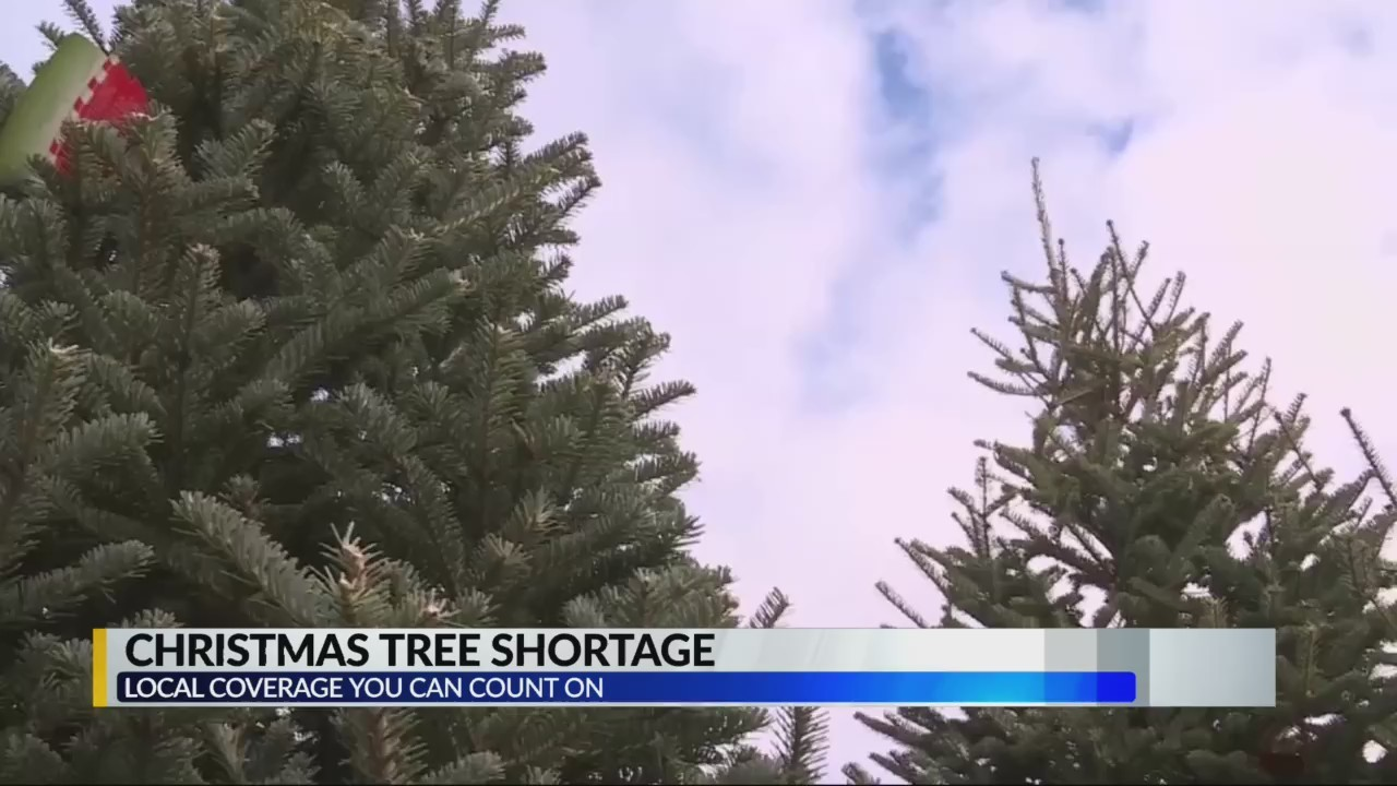 Christmas Tree Shortage.Christmas Tree Shortage Makes It Harder To Find Perfect Tree