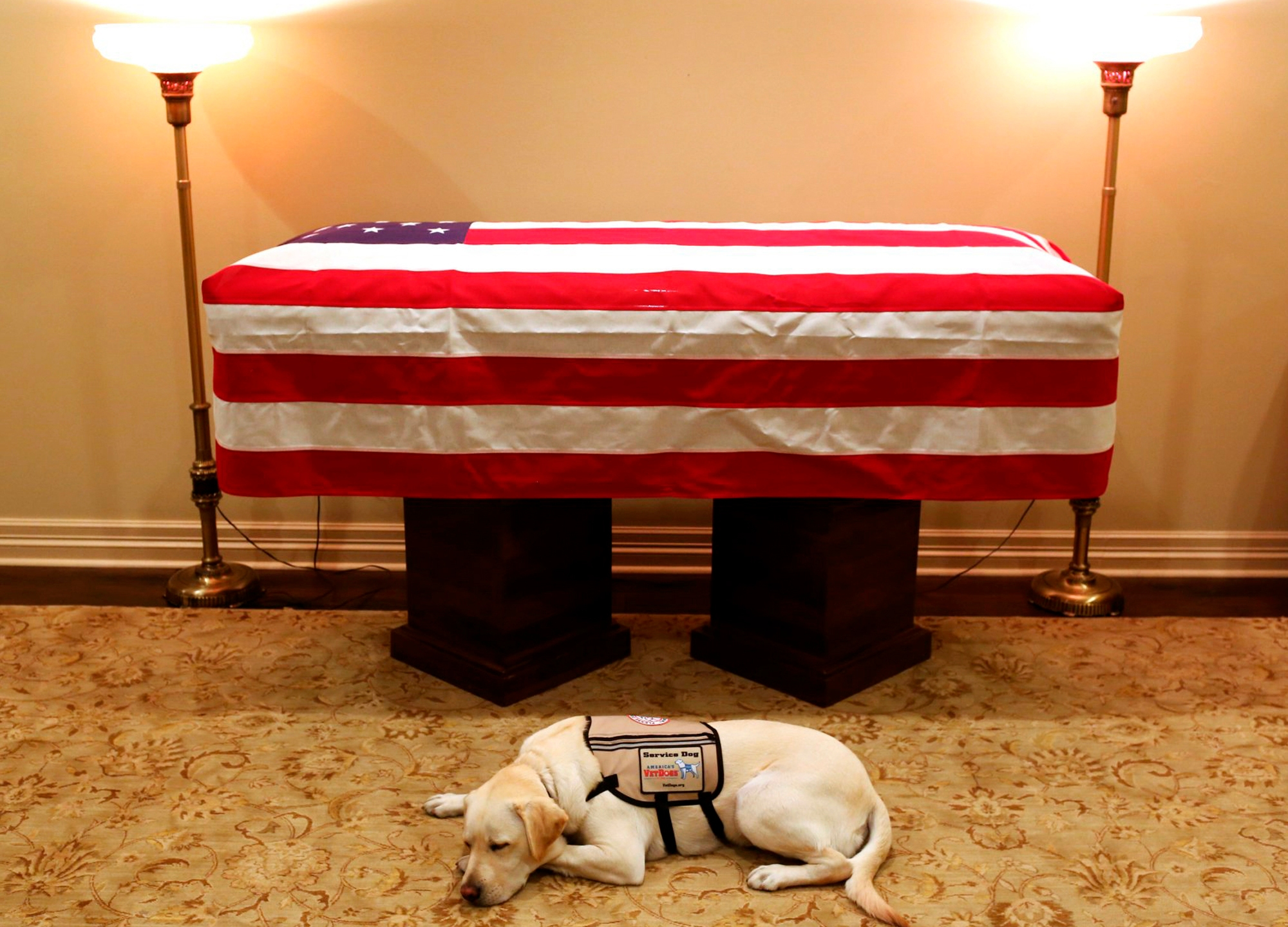 George_HW_Bush_Service_Dog_13561-159532.jpg53779287