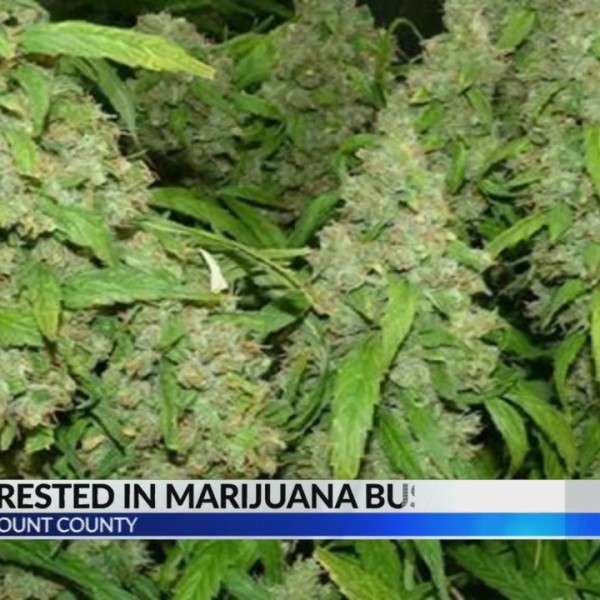 Two arrested for Marijuana bust in Blount County