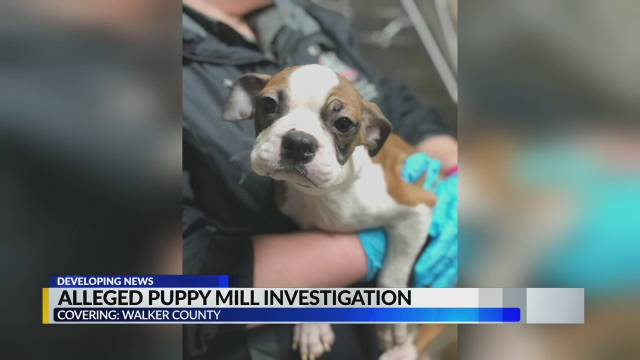 Alleged Walker County puppy mill investigation