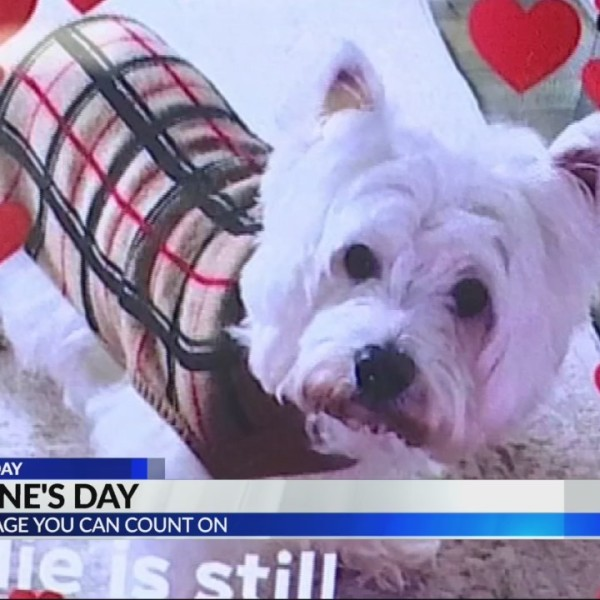 Girl hopes to be re-united with missing dog on Valentine's Day