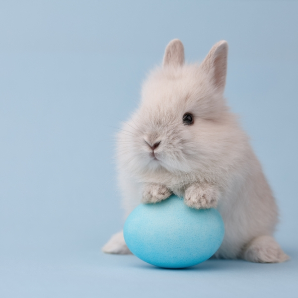 Easter Bunny_stock
