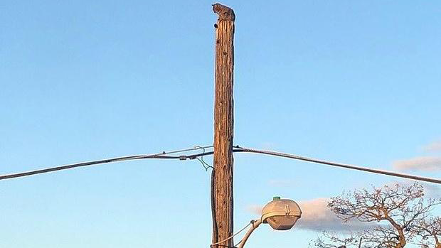 CAT STUCK ON TELEPHONE POLE_1553635351345.png.jpg