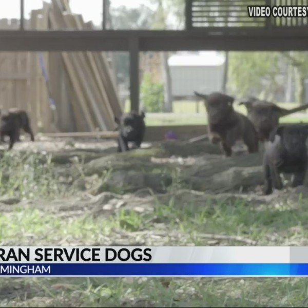 UAB_students_help_train_service_dogs_for_0_20190313122030