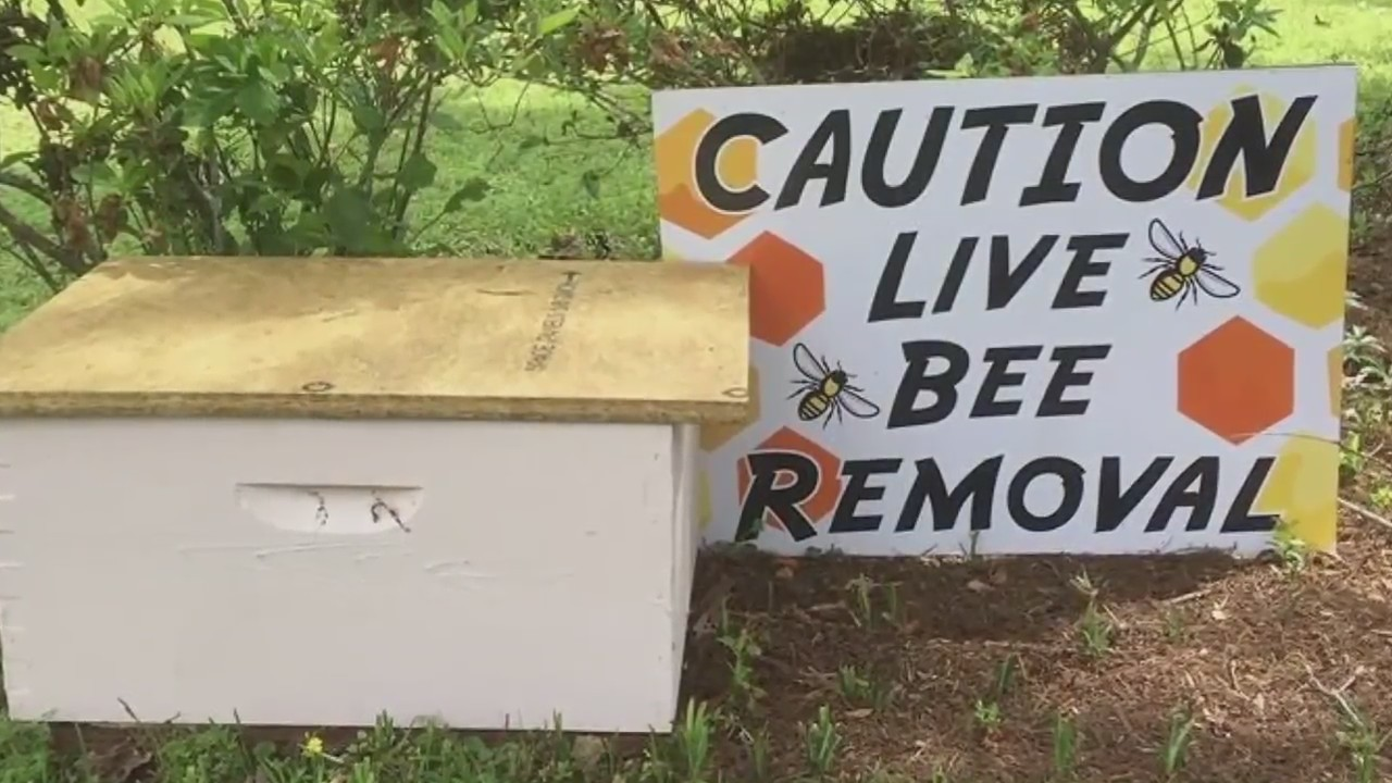 Box full of bees