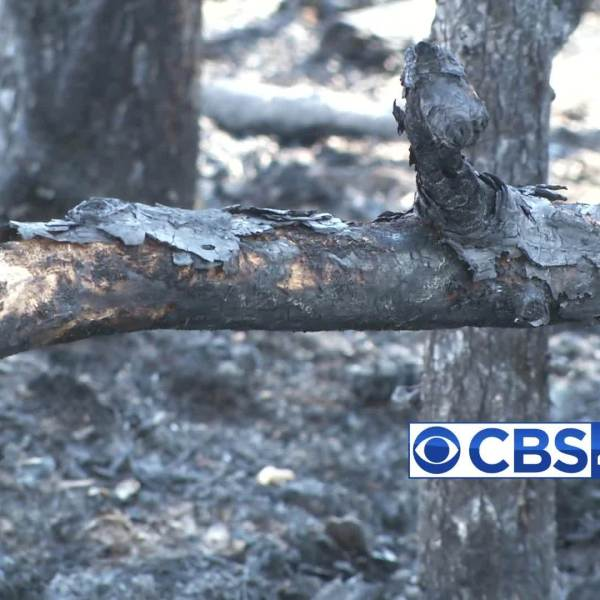 Calhoun County vegetation fires