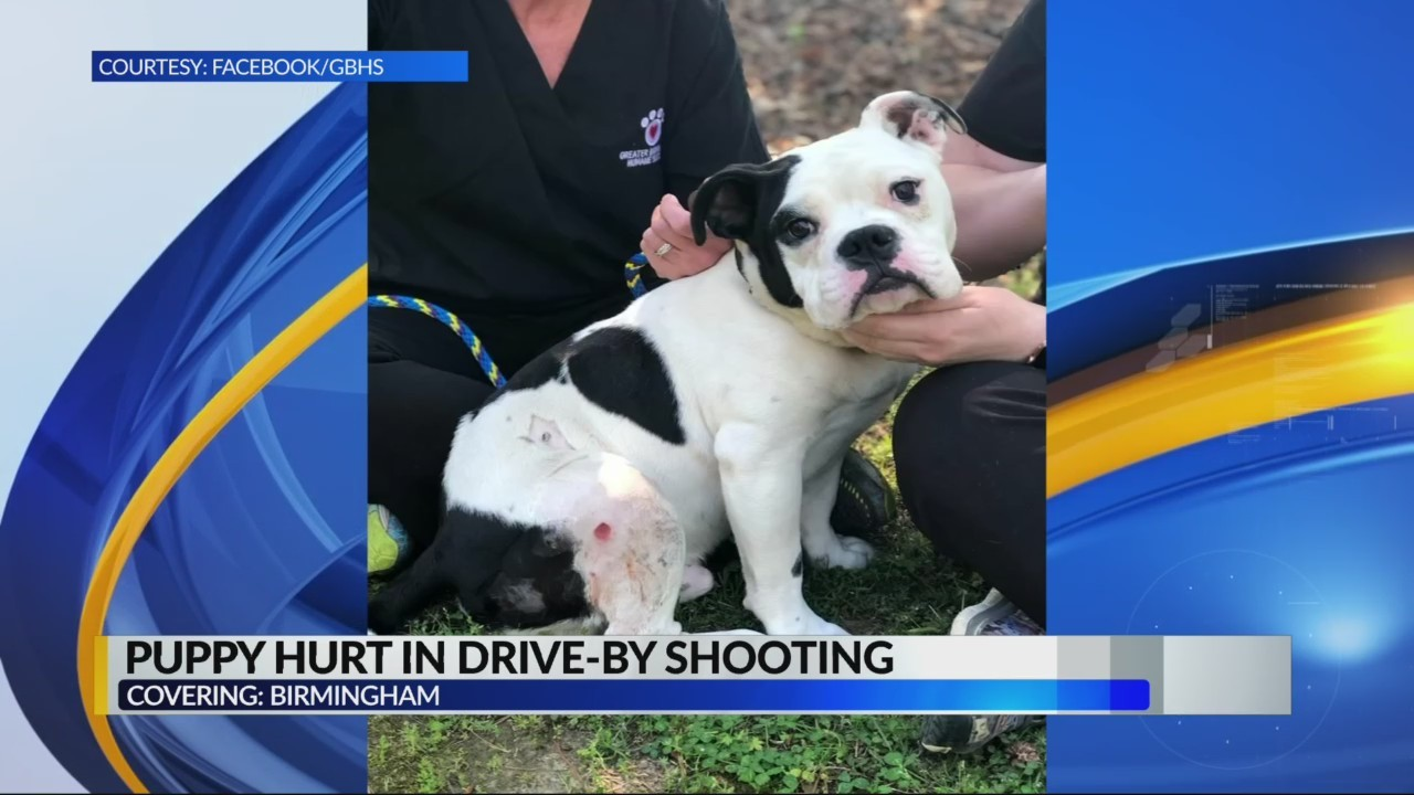 Puppy injured by driveby shooting