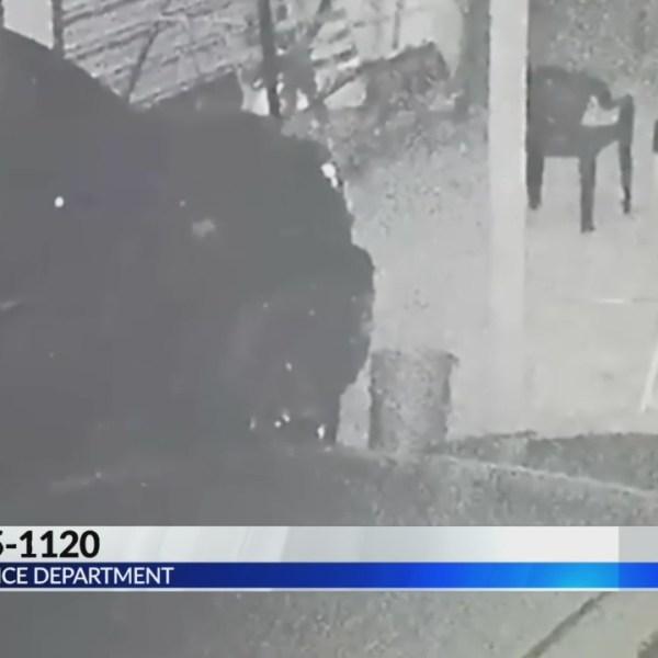 Clanton Police Looking for Car Break-In Suspect