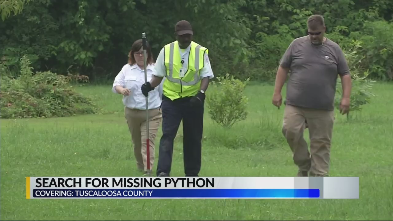 Crews searching for missing python