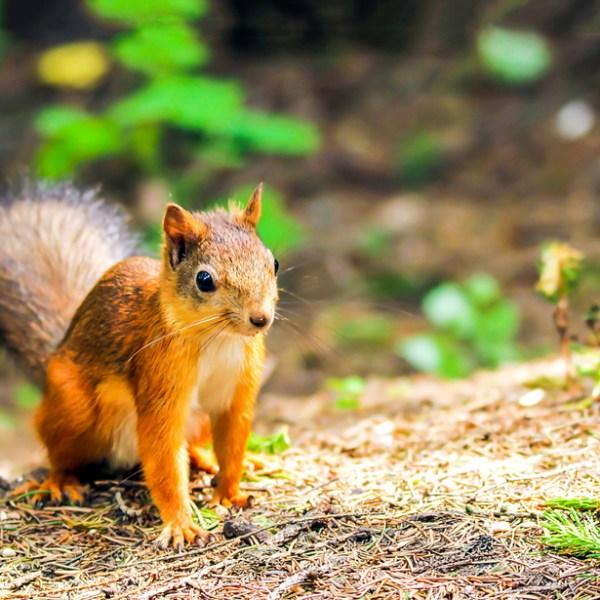 attack squirrel_1560884119614.jpg.jpg